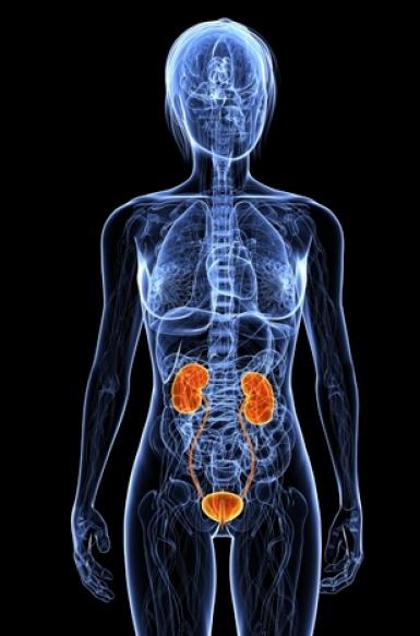 ¿Sabes cuáles son los síntomas de una infección urinaria y cómo puedes diferenciarla de una infección vaginal?
