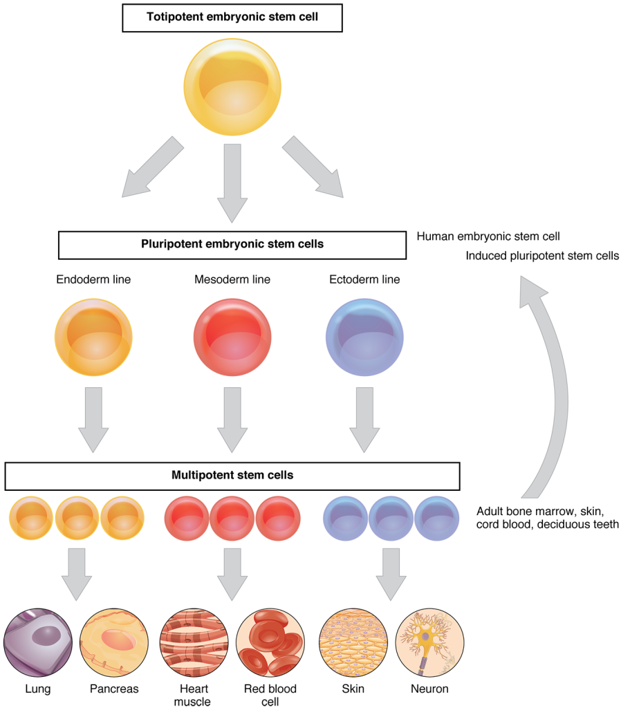 422_Feature_Stem_Cell_new